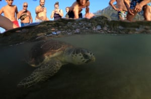 A turtle swims back to the sea following its release after treatment at the centre, as tourists look on at Iztuzu beach