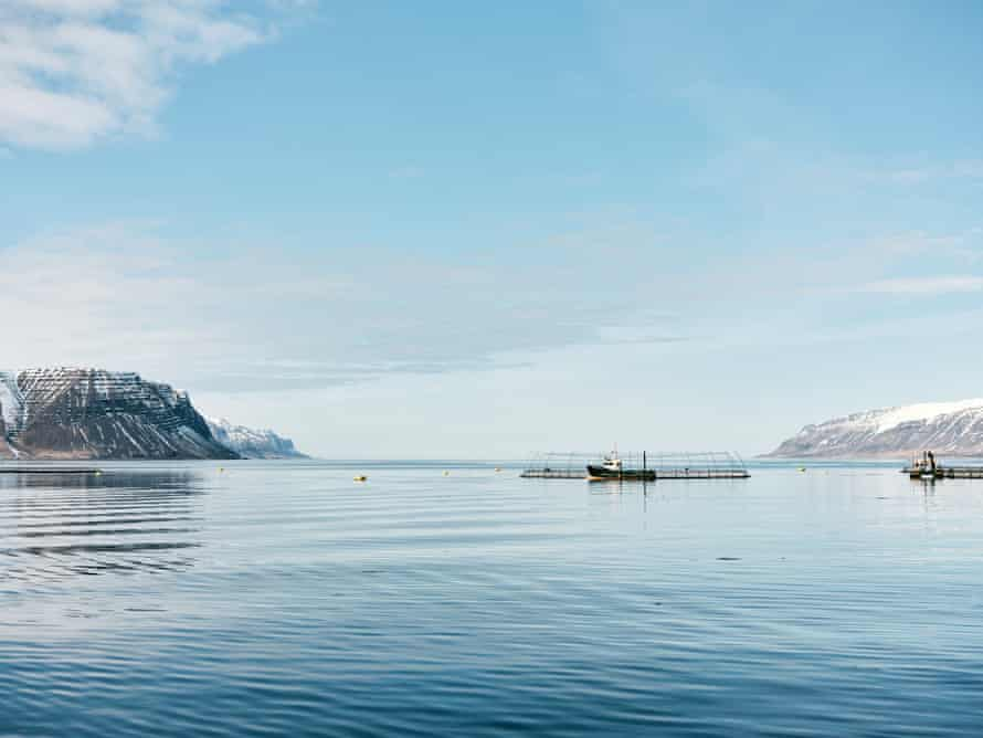 Open-water fish farms belonging to Iceland's biggest salmon farm company Arnarlax, situated off the coast of Bildudalur in the remote Westfjords region. Campaigners are pushing for open net farms to be replaced by closed containment farms, which avoid the risk of genetic dilution and sea lice infestation.