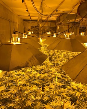 Cannabis in the nuclear bunker in Wiltshire