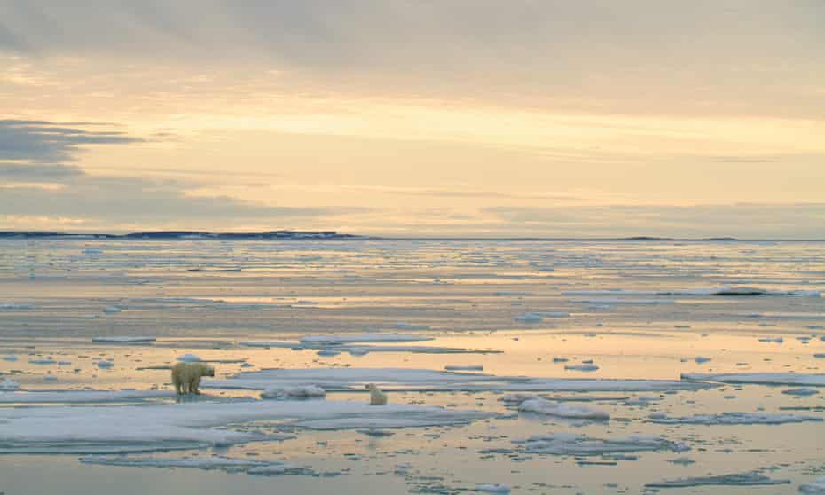 A polar bear and her cub off Svalbard, Norway. Polar bears are driven farther inland as global heating melts sea ice faster, increasing the chances of conflict with humans.
