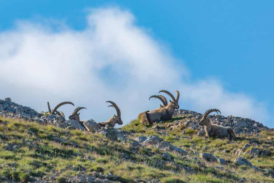 Swiss National Park, Switzerland IUCN Green List
