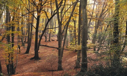 Epping Forest in Essex