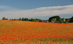 """This will go onward the same / Though Dynasties pass"" … A poppy field near Corbridge in Northumberland."