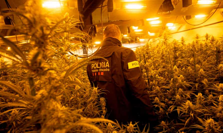 A member of the Catalan police during a raid on a drugs factory.