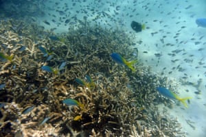 Tropical fish swim along the edges of a coral reef off Great Keppel Island, Queensland, Australia
