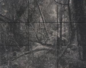 Understory, by Nigel Hewitt
