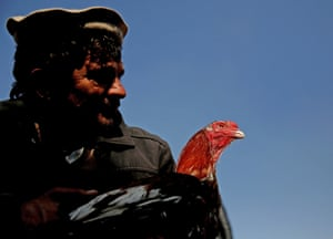 One trader claims the birds help bring relief from the stress of life in the Afghan capital