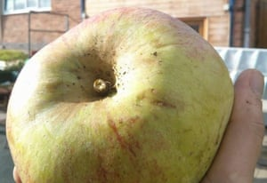 An apple from Siop Gymunedol Pwllglas community shop