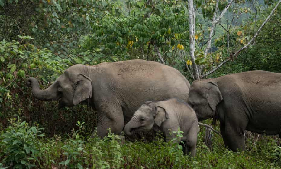 Pick a trip that offers the chance to walk beside elephants – do not not ride them.