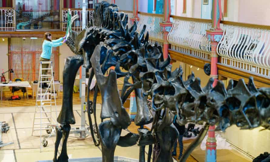 Dippy is pieced back together in Dorset