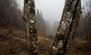 93f9533ca0 The fatal hike that became a Nazi propaganda coup