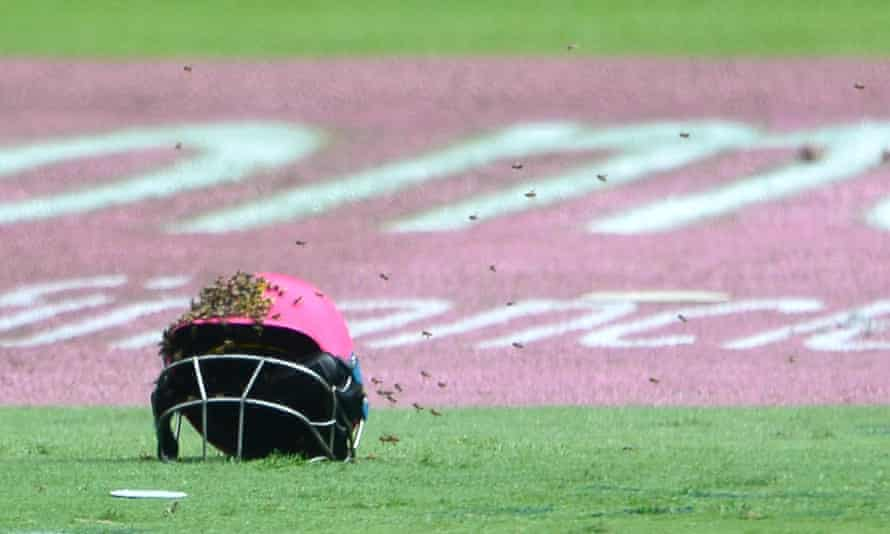 Bees swarm around a batsman's helmet as play is suspended in Johannesburg.
