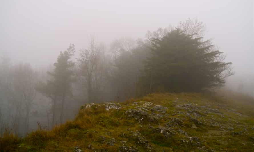 The stunted but presistent cliff-top yew on Wenlock Edge looms out of the daytime fog