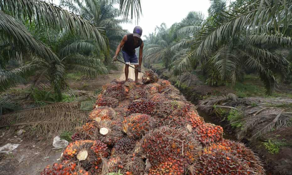 A worker on an oil palm plantation in Riau province, Indonesia. The use of palm oil for biodiesel is on the rise.