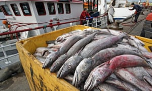 At present, more than 40% of fish stocks in the North Sea – the most productive sea in Europe – are overfished.