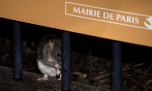 Nine city parks were closed in an attempt to control the rat population