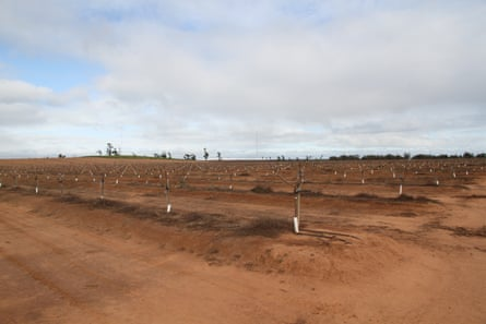 An almond plantation in Griffith