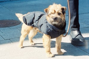 Arket's dog puffer jacket.