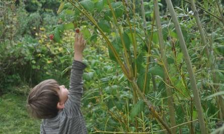 Kim Stoddart's son Arthur in their garden at home in Wales