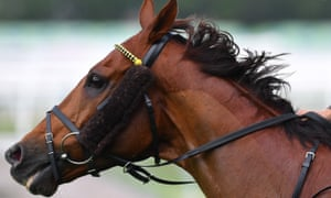 Tasmania announced on Thursday it would ban horse racing during the coronavirus crisis. Until now, horse and dog racing has been allowed to continue across Australia.