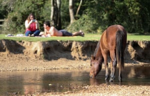 Brockenhurst, England A New Forest pony cools off in the Lymington river in Hampshire