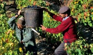 Grape stuff: Portuguese wine-makers at work.