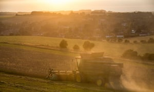 Organic wheat harvesting  at the Sheepdrove organic farm near Lambourn in Berkshire