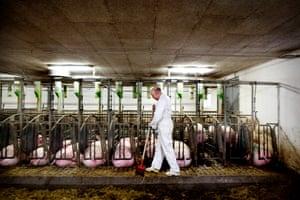 A pig farm at Slangerup, Denmark.