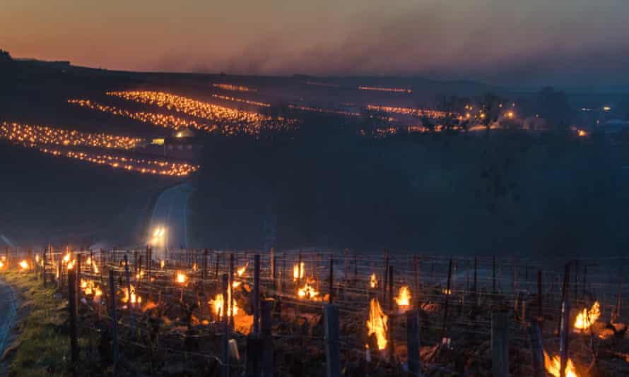 Winemakers burn anti-frost candles in Chablis, Burgundy, France.