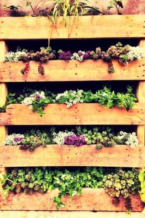 A wooden pallet vertical garden