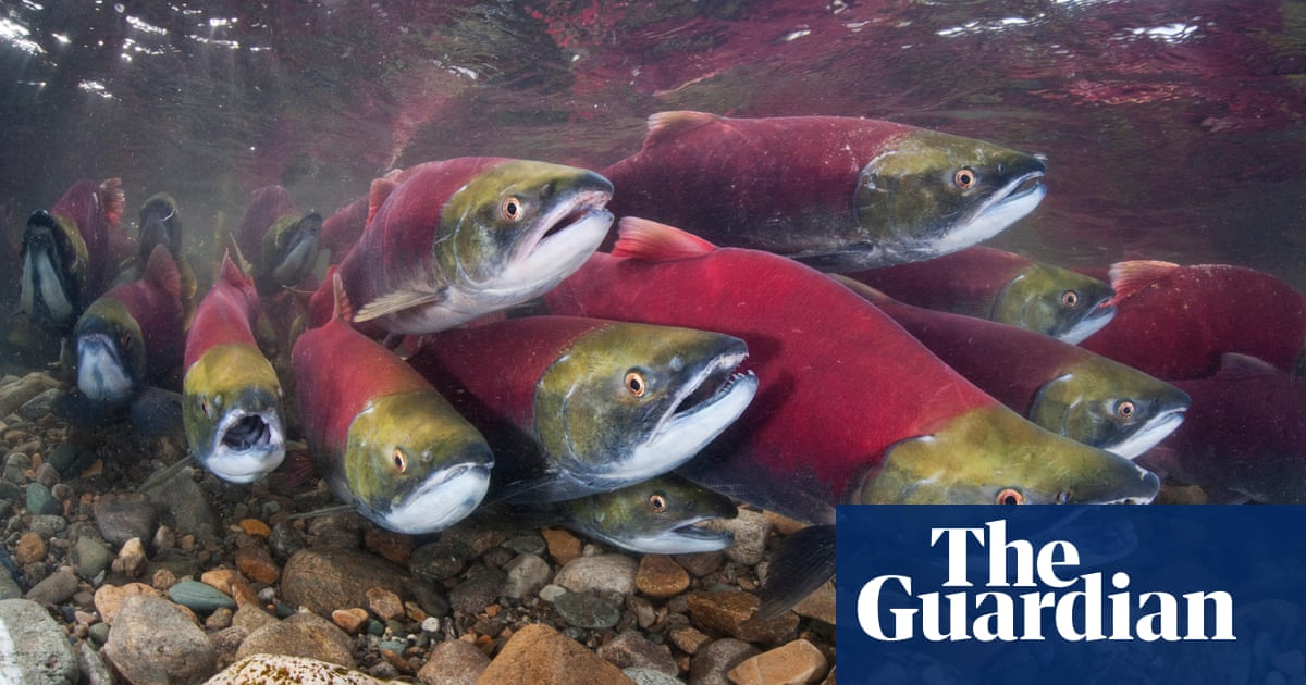 Migratory river fish populations plunge 76% in past 50 years