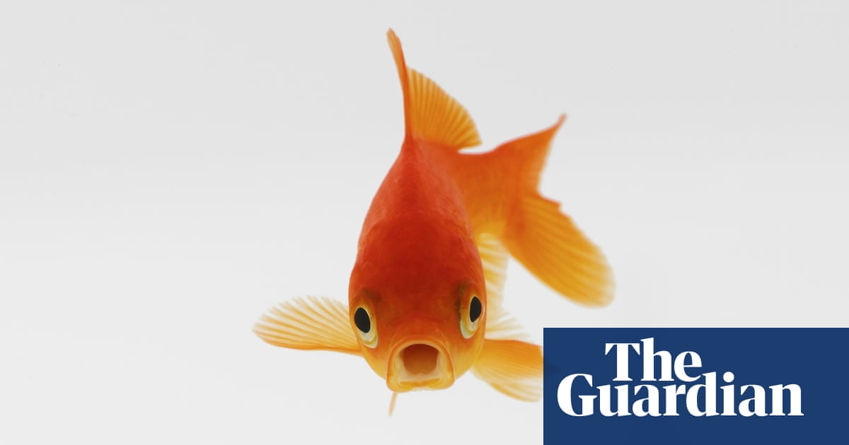 Carping On How Did A Small Pond Become Home To 10 000 Goldfish Wildlife The Guardian