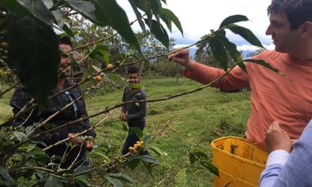 'Gracisa por ustedes': picking coffee cherries on the Guarnizo farm.