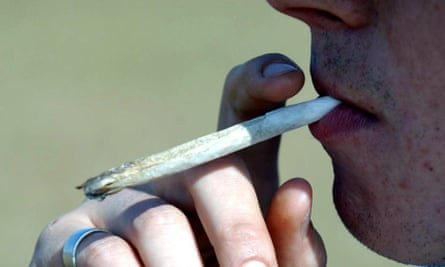Cannabis users are unaware of the potency of the drug they are consuming.