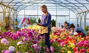 Flower pickers at the Electric Daisy Flower Farm near Bath.