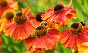 Bring wildlife into your garden ... perhaps with bee hotels.