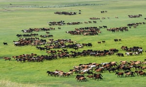 Horses run on a prairie during an equine culture event in East Ujimqin Banner of Xilingol League, north China's Inner Mongolia Autonomous Region Equine culture event, East Ujimqin Banner, Mongolia - 20 Jul 2019