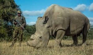 Sudan, the last male northern white rhino, was put down last week because of ill health, leaving only two ageing females.
