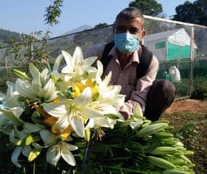 Flowers in Uttarakhand.