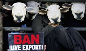 Members of People For The Ethical Treatment Of Animals protest wearing sheep masks outside the Australian embassy in London.