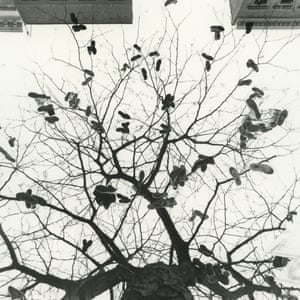 """A Tree Grows in Harlem, 1998  """"I had seen sneakers on the cables here and there, but I had never seen any like this one. It was in front of P.S.133, on 131st Street. The sneakers have not grown anymore, for over ten years. Time changes everything."""" - Katsu Naito"""