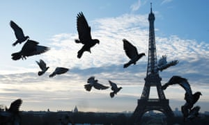 A French study looked at pigeon toe mutilations across 46 sites in Paris.