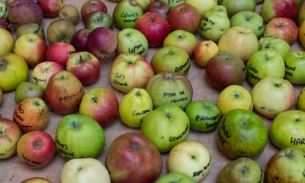 The apples we know today, varieties of the species Malus domestica, have long been known to have descended from a species of wild apple from central Asia.