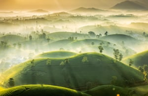 Tea Hills Early morning mist over the tea hills of Phu Tho province in Vietnam