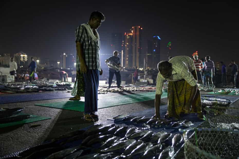 An early morning fish market at Zayed port