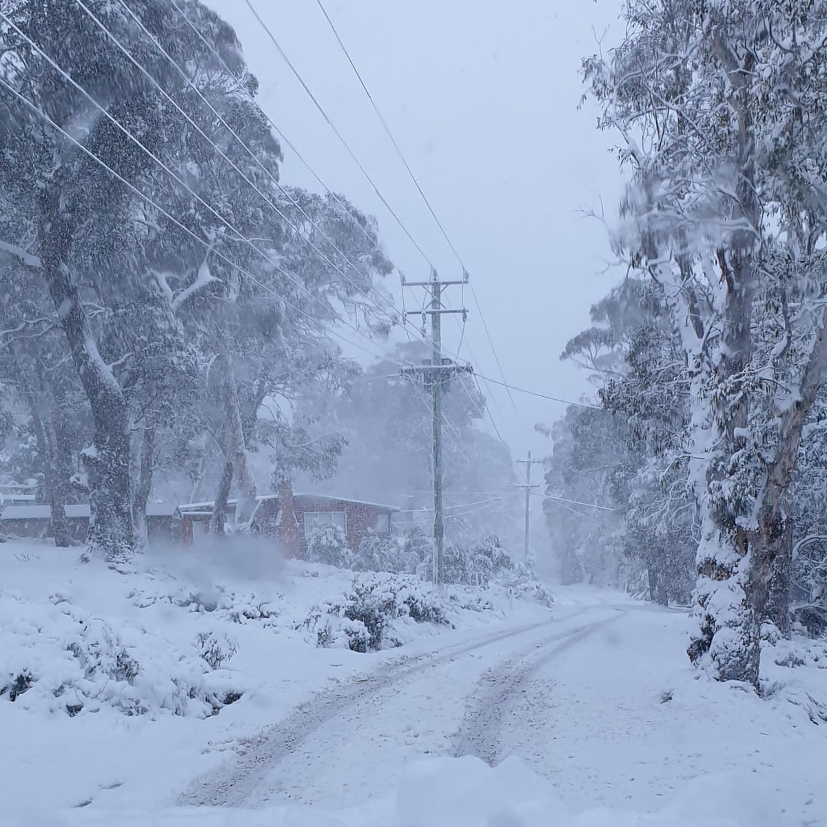 Spring Snow Blankets Parts Of Tasmania A Week After Bushfires Raged Tasmania The Guardian