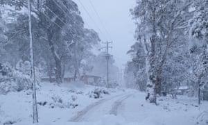 snow on trees in Tasmania