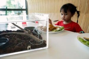 Bangkok, Thailand. A three-year-old girl eats next to a garter snake at the newly-opened Naka Snake Cafe at Siam Serpentarium snake museum