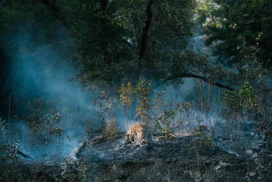 Smoke during the prescribed burn