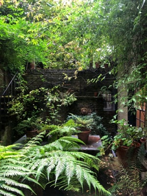 'A space more inspirational than I could have ever imagined': ferns jostle with jasmine.